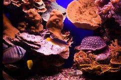 Onderwater koralen en Rode Overzeese vissen Royalty-vrije Stock Foto