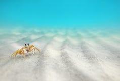 Onderwater, Krab op de zandige bodem stock foto's