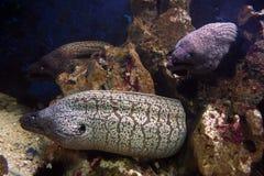 Onderwater landschap Stock Afbeeldingen