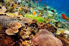 Onderwater landschap Stock Fotografie
