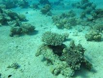 Onderwater landschap Stock Foto's