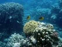 Onderwater landschap Royalty-vrije Stock Afbeelding