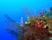 Onderwater landschap Stock Foto