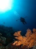 Onderwater landschap in Bali, Indonesië Royalty-vrije Stock Foto's