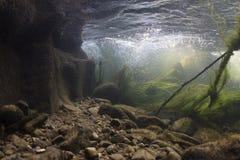 Onderwater landschap De rivier van de berg royalty-vrije stock fotografie