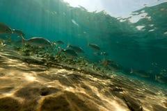 Onderwater landschap in het Rode Overzees royalty-vrije stock fotografie