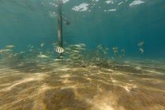 Onderwater landschap in het Rode Overzees stock afbeeldingen
