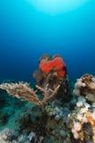 Onderwater landschap in het Rode Overzees royalty-vrije stock afbeeldingen