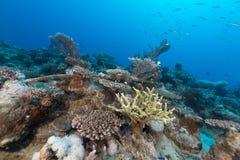 Onderwater landschap in het Rode Overzees stock foto