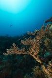 Onderwater landschap in het Rode Overzees royalty-vrije stock afbeelding