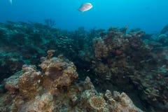 Onderwater landschap in het Rode Overzees stock afbeelding