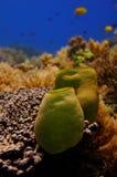 Onderwater landschap met sponsen Stock Foto