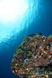 Onderwater mening Stock Foto's