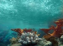 Onderwater Mening van de Oceaan met Licht Glanzend Th Royalty-vrije Stock Fotografie