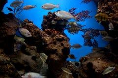 Onderwater mening, vissen, koraalrif royalty-vrije stock fotografie