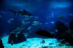 Onderwater mening, vissen, zonlicht stock afbeelding