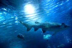 Onderwater mening, vissen, zonlicht royalty-vrije stock foto's