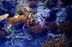 Onderwater oceaanvegetatie Stock Afbeelding
