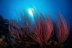 Onderwater in Papoea Stock Fotografie