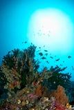 Onderwater reefscapes Royalty-vrije Stock Fotografie