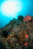 Onderwater reefscapes Royalty-vrije Stock Foto