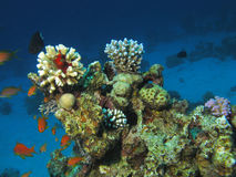 Onderwater scène. Stock Fotografie