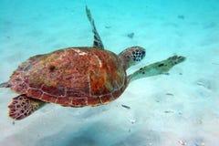 Onderwater schildpad stock foto