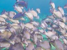 Onderwater school van vissen Stock Foto