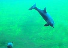Onderwater Schoonheid stock afbeeldingen