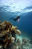 Onderwater: Scuba-uitrusting-duiker & koraalrif Royalty-vrije Stock Foto's