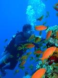 Onderwater videographer Stock Foto's
