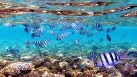 Onderwater vissen Stock Foto's