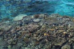 Onderwater vreedzaam koraalrif in Fiji Stock Fotografie
