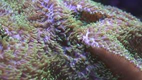 Onderwater wereld stock videobeelden