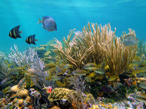 Onderwater wereld Royalty-vrije Stock Foto's