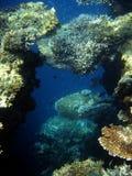Onderwater wereld Stock Fotografie