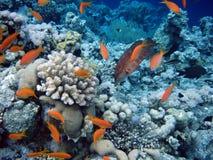 Onderwater wereld Stock Foto's
