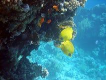 Onderwater wereld Royalty-vrije Stock Afbeelding