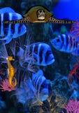 Onderwater wereld Stock Foto