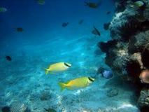 Onderwater wereld. Stock Afbeeldingen