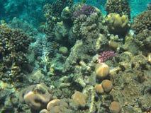 Onderwater wereld Royalty-vrije Stock Afbeeldingen