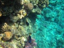 Onderwater wereld Stock Afbeeldingen