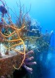 Onderwater wrak royalty-vrije stock afbeelding