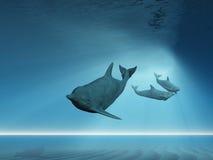 Onderwater zwemmen van dolfijnen Stock Foto