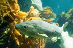 Onderwater zwemmen van vissen Stock Foto