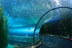 Onderwateraquariumtunnel Royalty-vrije Stock Fotografie
