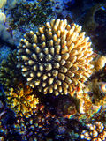 Onderwaterbloem Royalty-vrije Stock Fotografie