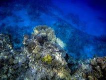 Onderwatercoral reef Stock Foto