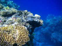 Onderwatercoral reef Stock Foto's
