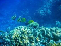 Onderwatercoral reef Stock Afbeelding
